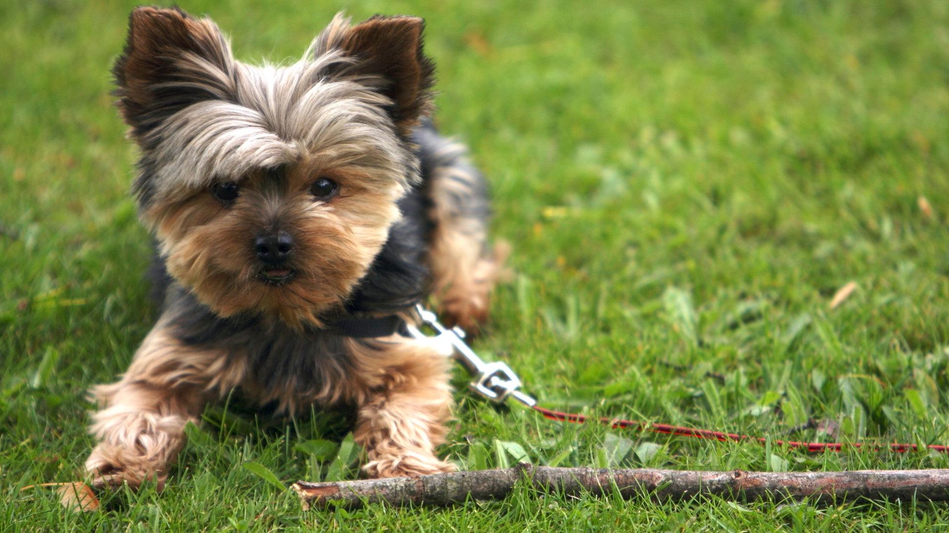 Sweetest Dog Breeds