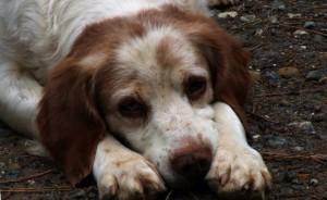 Лечение цистита у собак