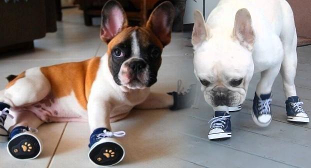 Обувь для французского бульдога