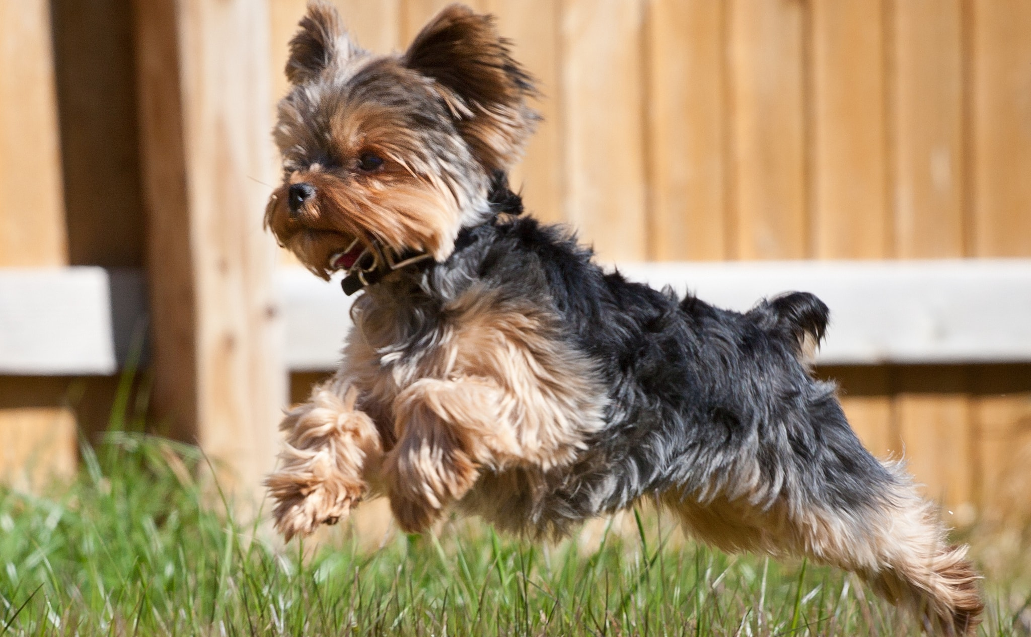 Порода собак с фото маленьких - 2be21