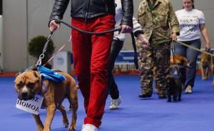 Выставки собак в Москве 2016