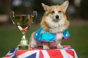 Любимая собака королевы англии