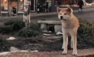смотреть пород собак фото