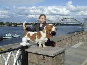 Собака бассет хаунд