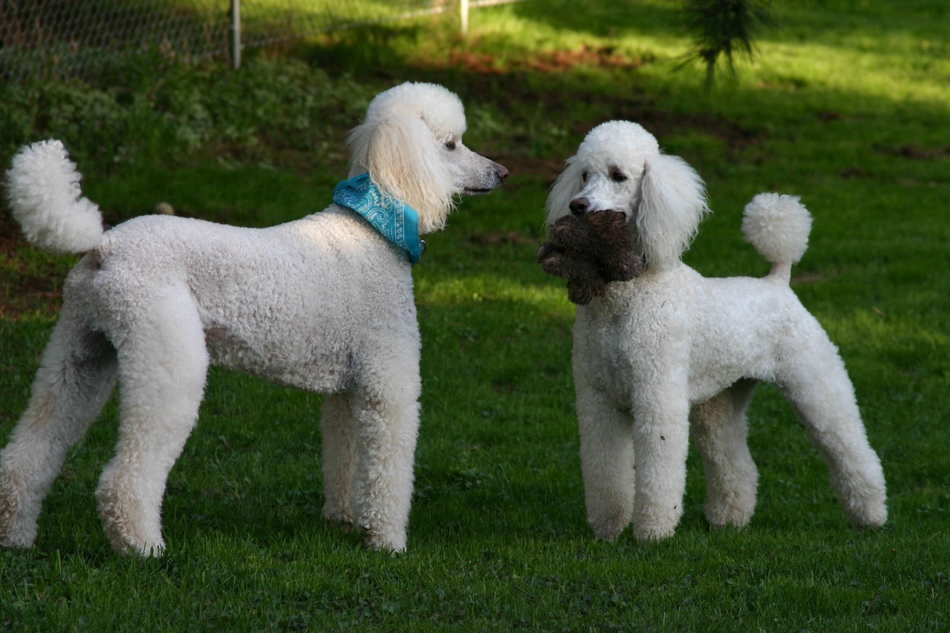 фотографии пород собак с названиями