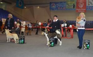 Выставки собак в Харькове 2016