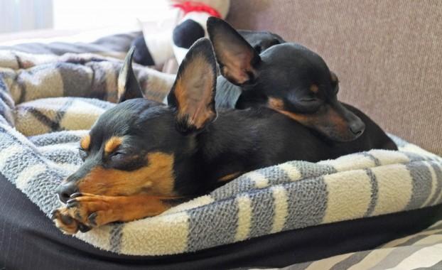 фото маленьких пород собак и название