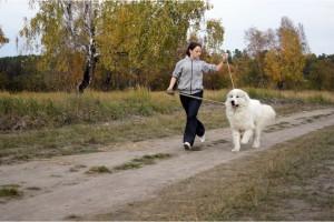 Купить щенка пиренейской горной собаки