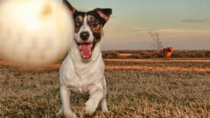 Порода собаки из фильма Маска цена