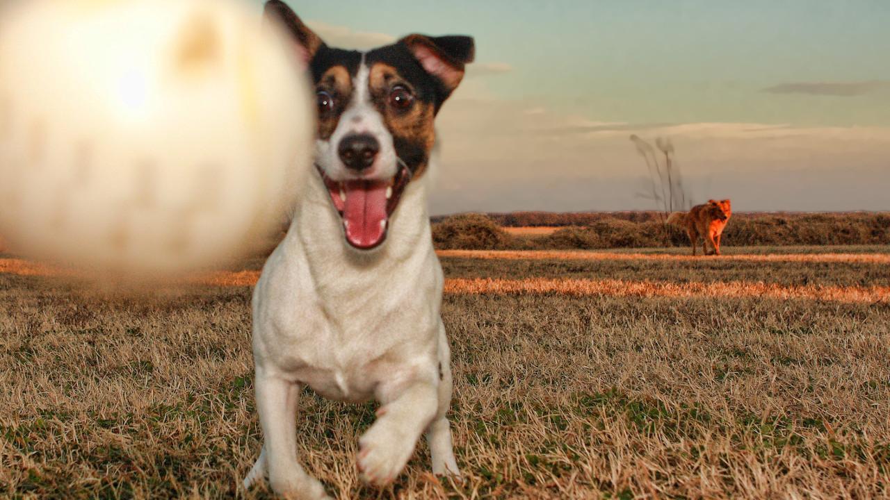 фото собаки из фильма маска