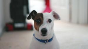 Порода собаки из фильма маска название