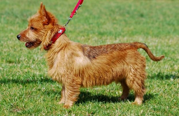 Породы маленьких собак с фотографиями  ВСЕ ПОРОДЫ