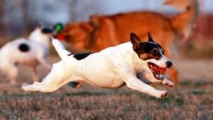 Собака из фильма маска порода фото