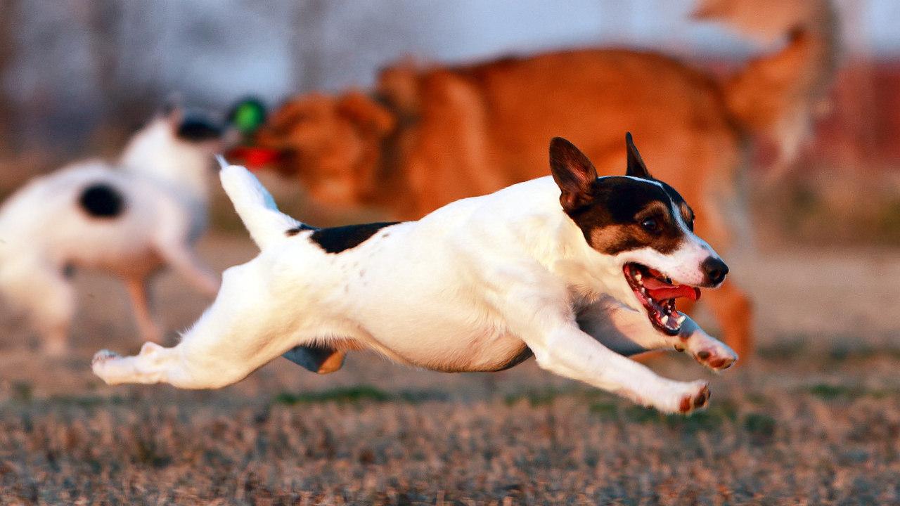 собаки из фильма хатико