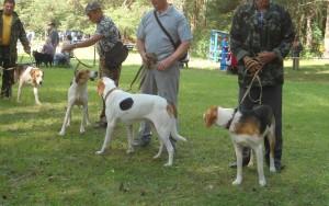 Русские гончие собаки фото