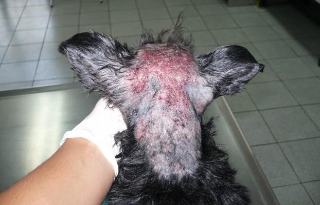 Понос с кровью у собаки чем лечить в домашних условиях