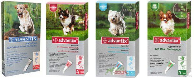 Адвантикс для собак: инструкция по применению и отзывы | все о собаках.