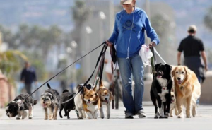 Сколько всего существует пород собак в Мире