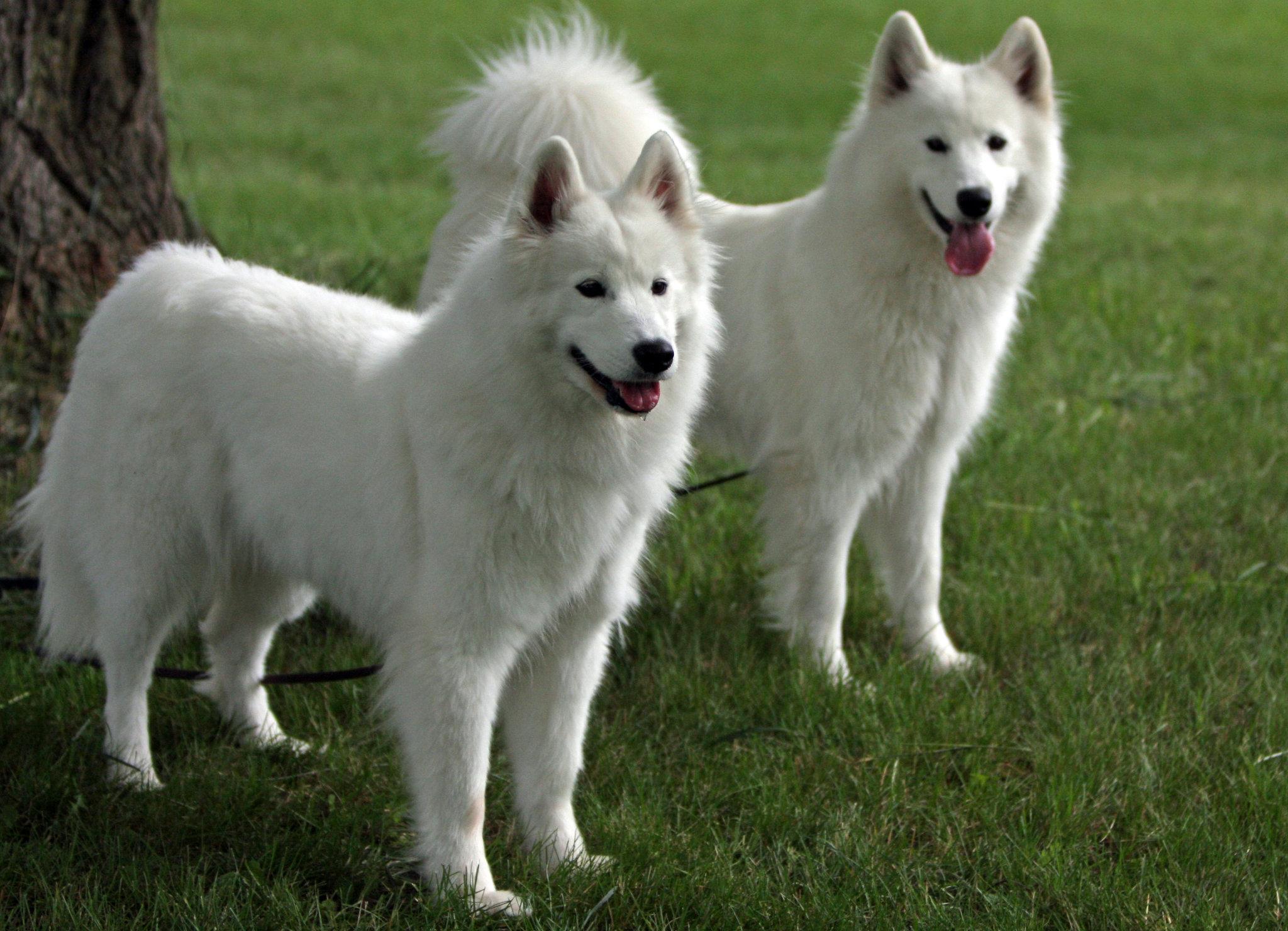 Смотреть бесплатно дораму Время пса и волка Time of Dog