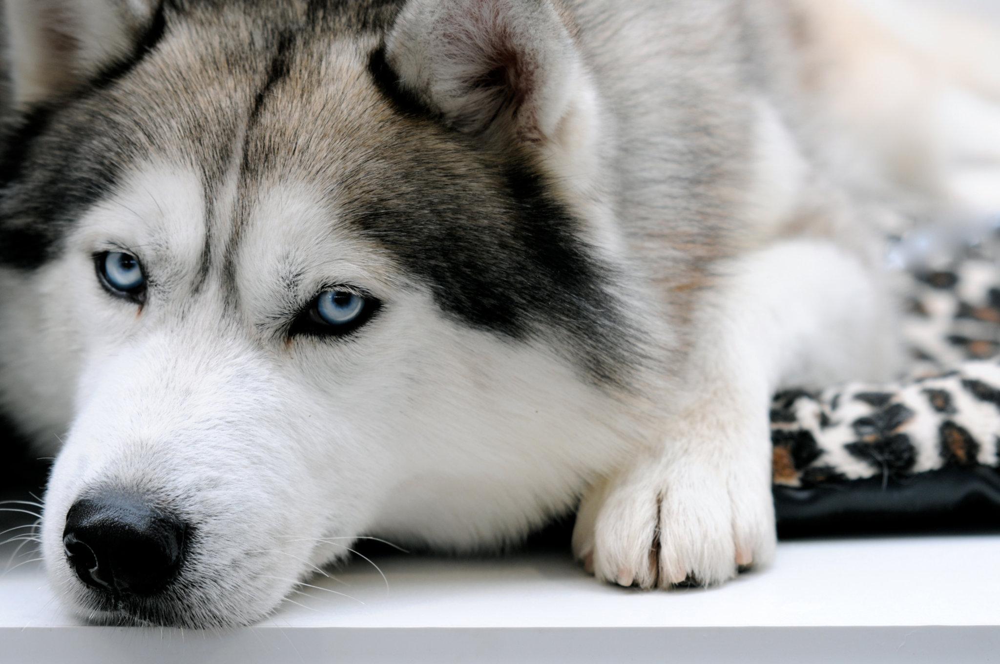 Фото с волк