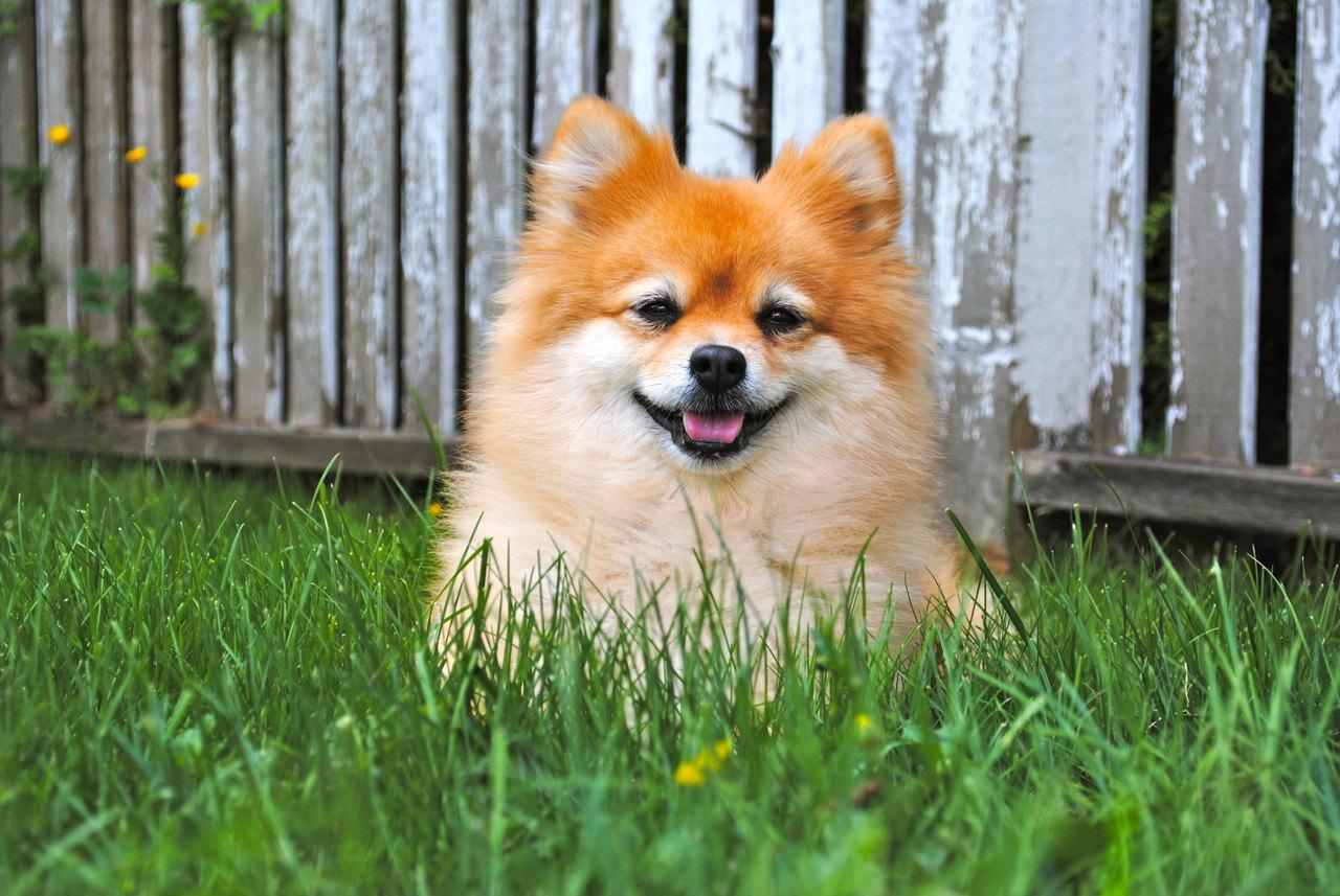Маленькие породы собак – удивительные милые создания картинки