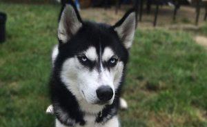 Как собака заработала хозяйке десятки тысяч евро