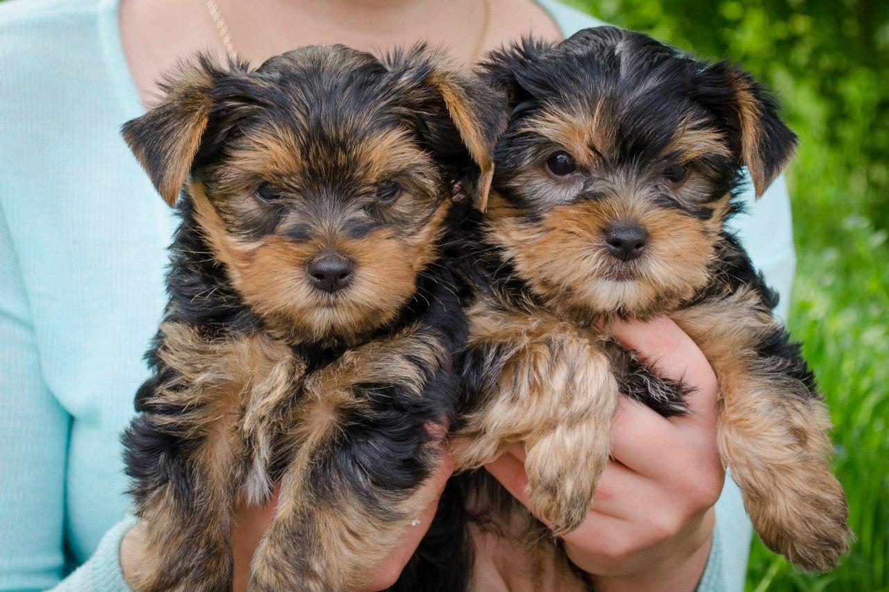 Как назвать щенка-мальчика Имена для щенков-мальчиков. Клички для собак