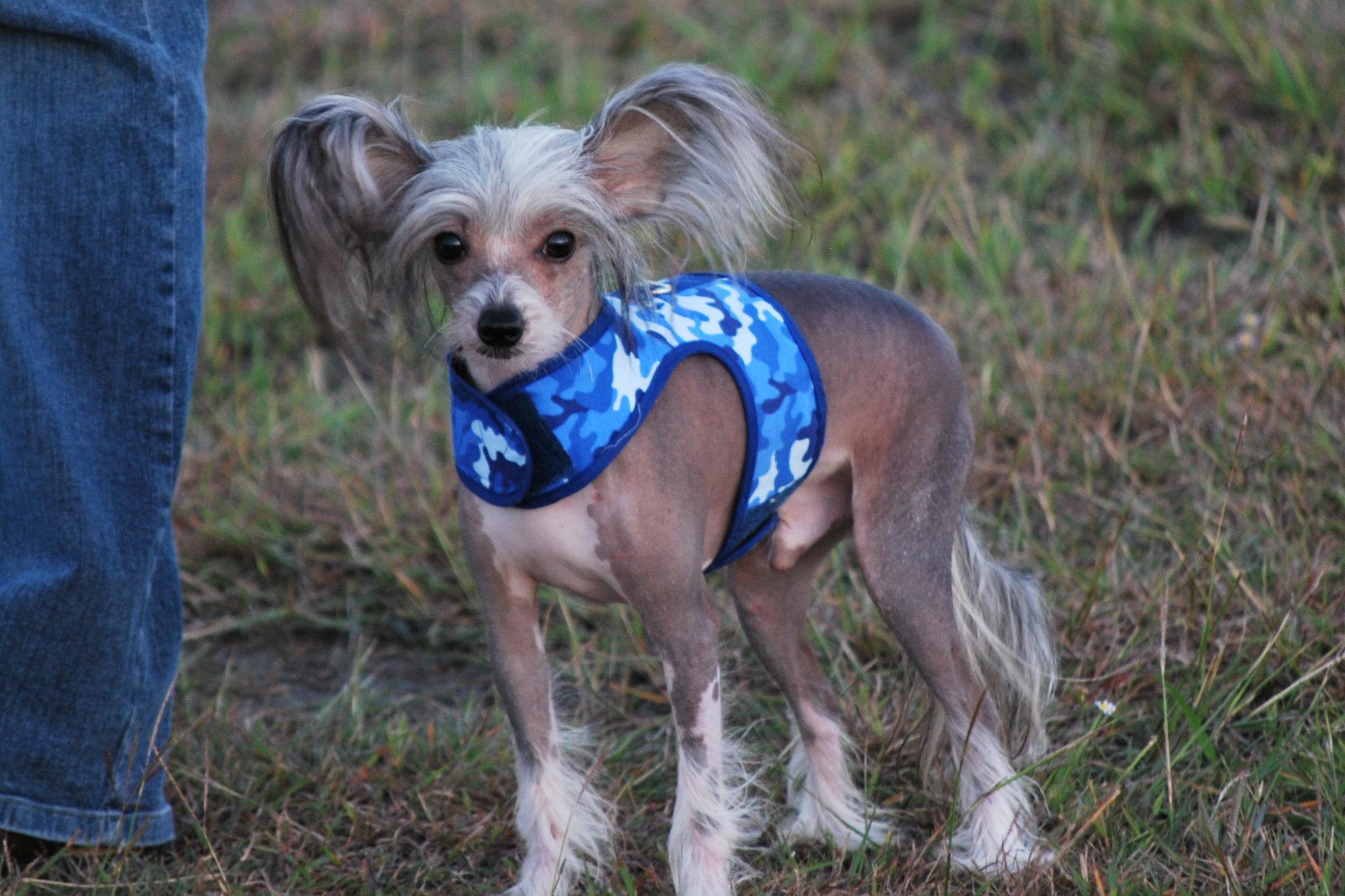Маленькие породы собак – удивительные милые создания новые фото