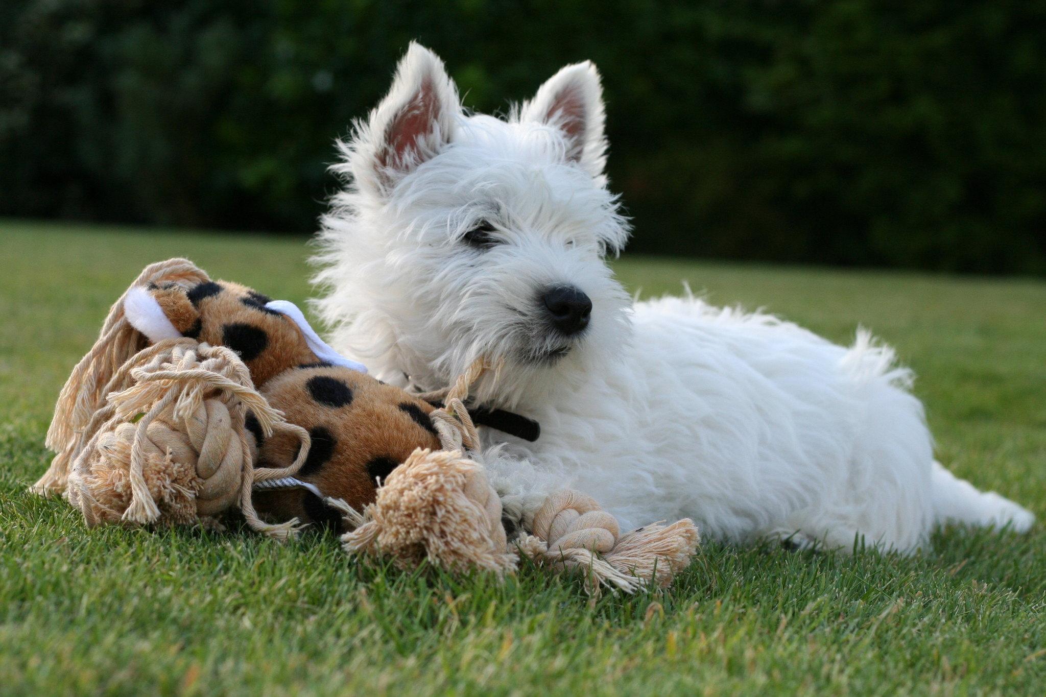 маленькие и средние породы собак фото с названиями