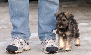 Мелкие породы собак с фото и названиями