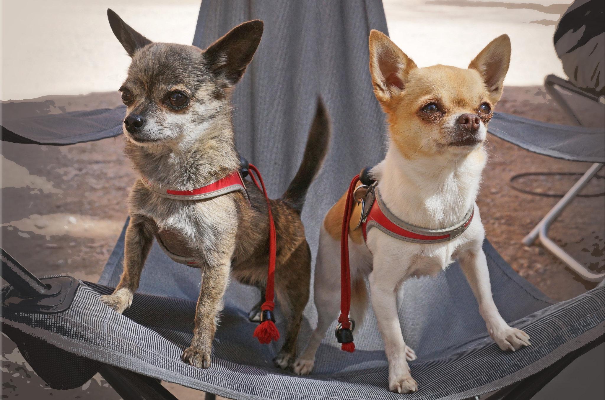 мини собаки породы список фото цена