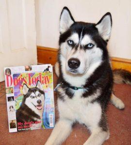Собака Аника на обложке журнала Dogs Today