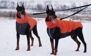 Одежда для собак мини той терьер