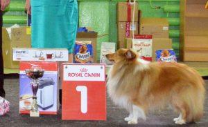 Выставка собак в Ярославле 2017: расписание РКФ