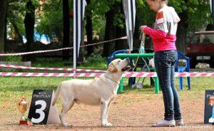Выставки собак в Казани 2017: расписание РКФ