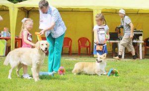 Выставки собак в Новосибирске 2017: расписание РКФ