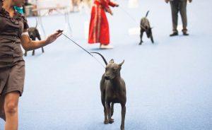 Выставки собак в Перми 2017: расписание РКФ