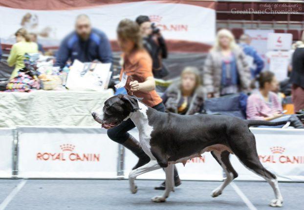 Расписание выставок собак в СПб на 2017 год