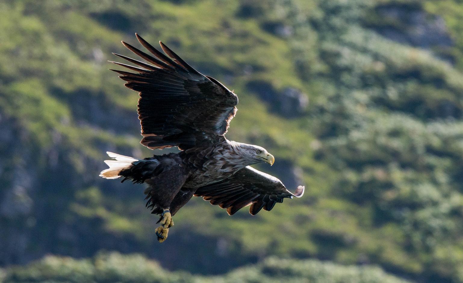 птицы орлан белохвост несколько лет
