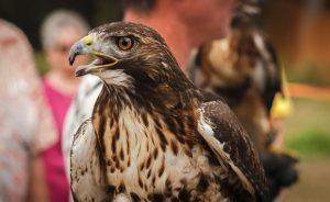 Хищные птицы: фото с названиями и описанием