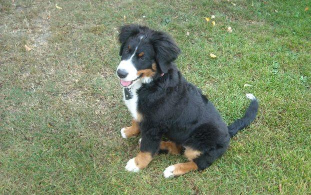 Имена для собак - редкие и красивые