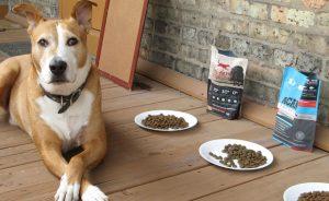 Какой сухой корм для собак лучше - рейтинг и отзывы