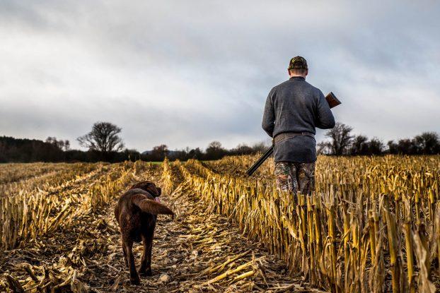Клички для охотничьих собак мальчиков