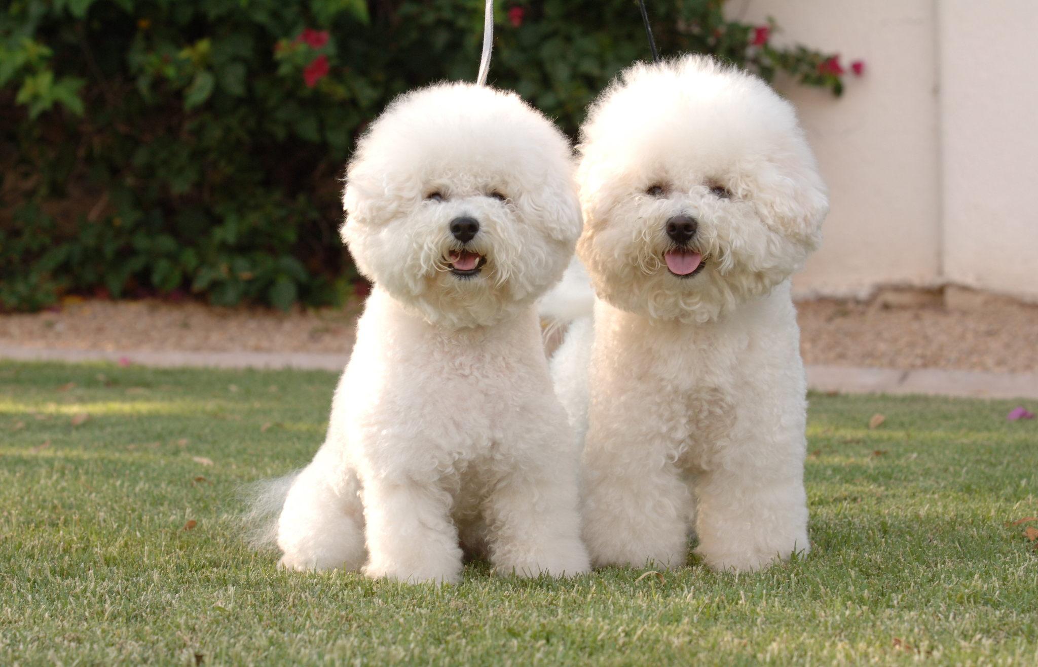 породы мелких собак с фотографиями