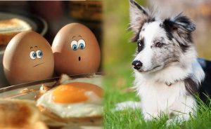 Можно ли собаке давать яйца