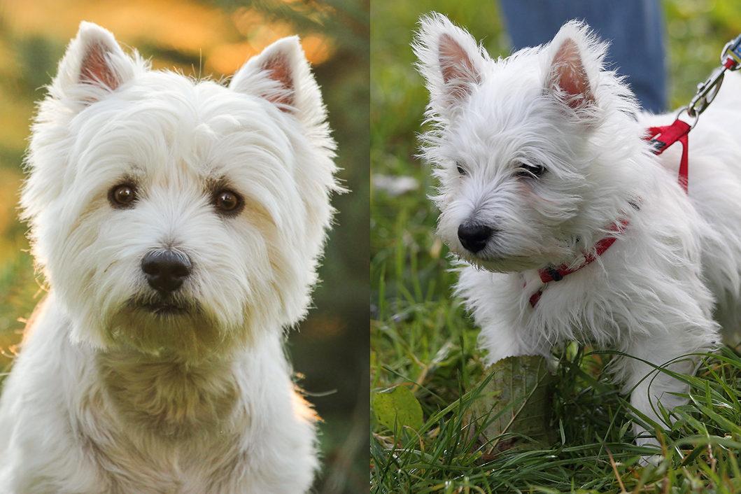 собаки для квартиры породы и фото