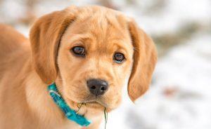 Симптомы лишая у собак