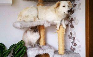 Собака отжала у кошки лежанку