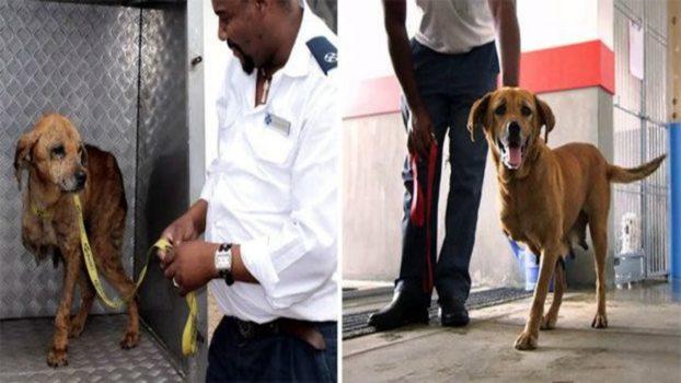 Собака спасла детей от выстрела грабителя 3