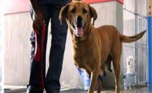 Собака спасла детей от выстрела грабителя